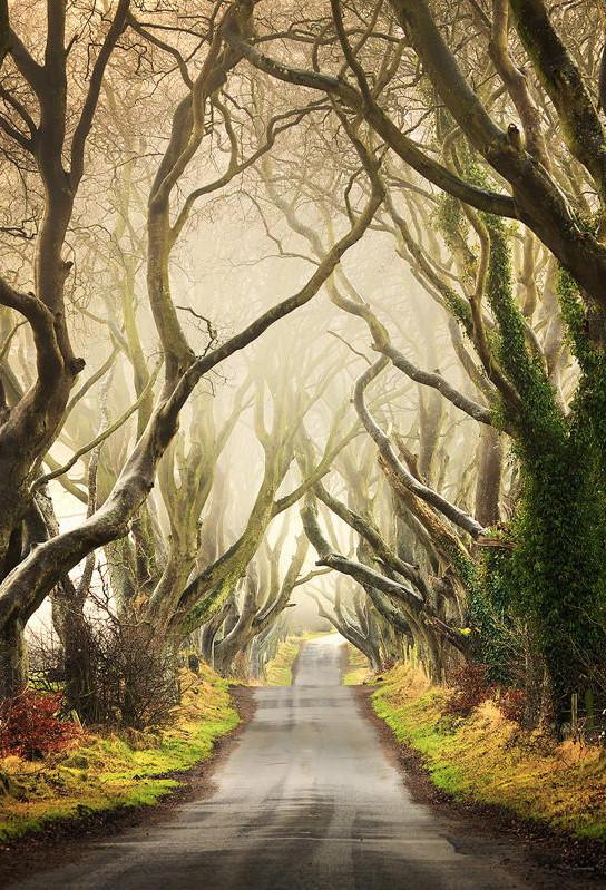 Уголок, окутанный тайнами… Буковая аллея Ирландии в объективах