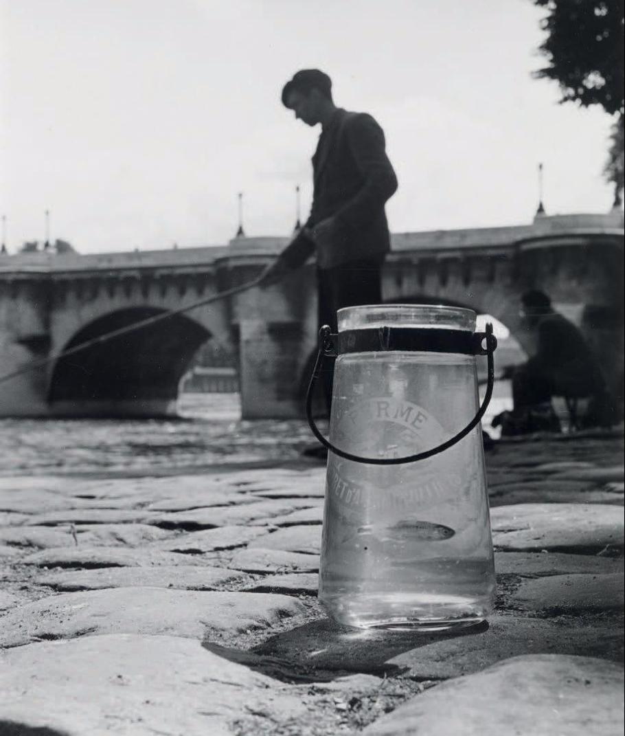 1951.  Линь пойманный в Сене, у Нового моста
