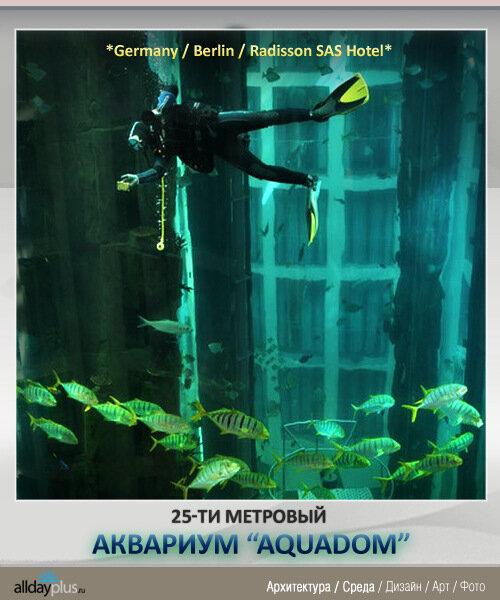 """Большой-пребольшой аквариум в Берлине """"AquaDom"""". 8 фото"""