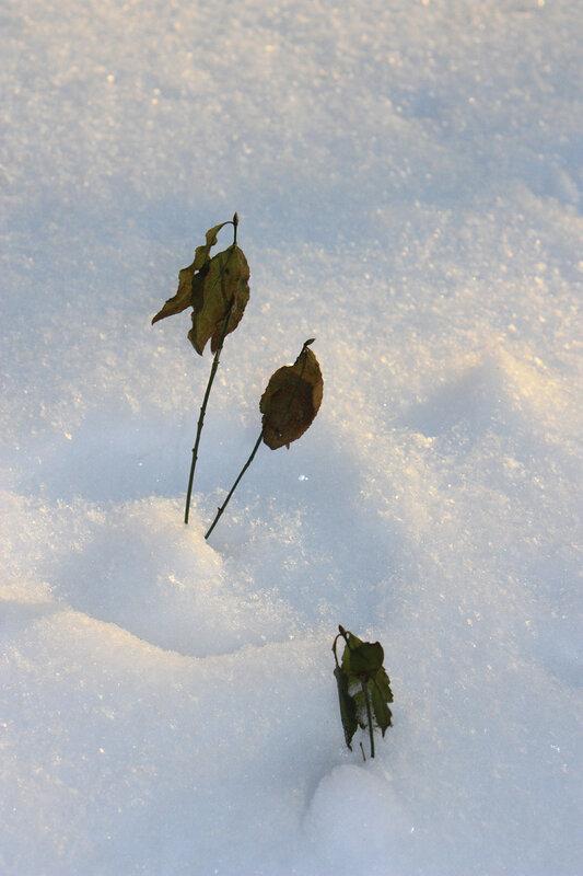 Зеленые листочки и снег