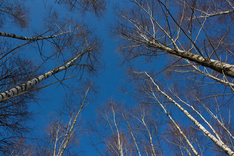 Синее-синее небо