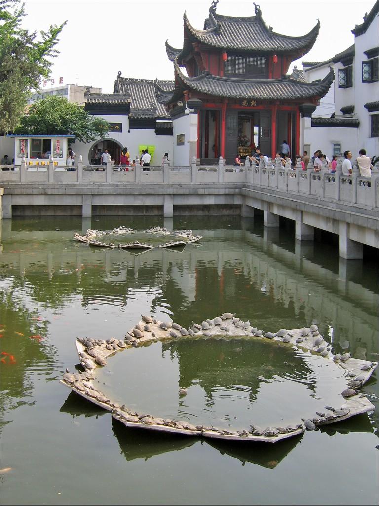 Пруд с золотыми рыбками и черепашками, монастырь Гуйюань