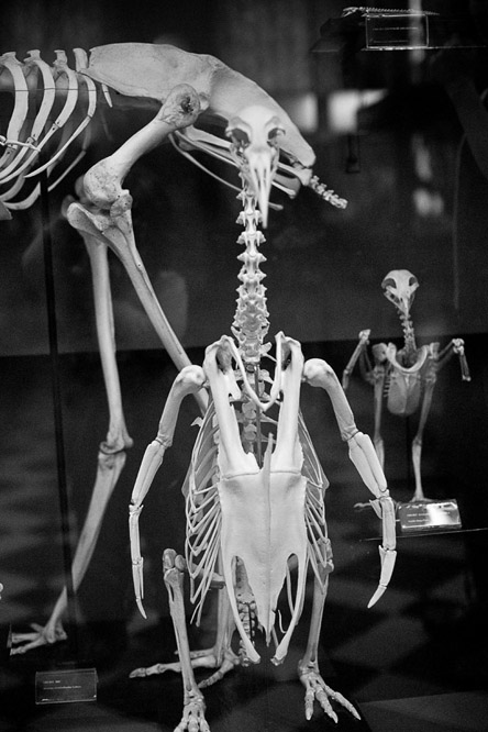 фотография скелета. Дочка сказала, что он - ее роста