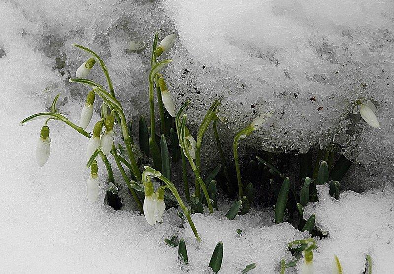 ...из снежной темницы...