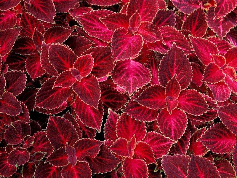 Узоры природы,листья