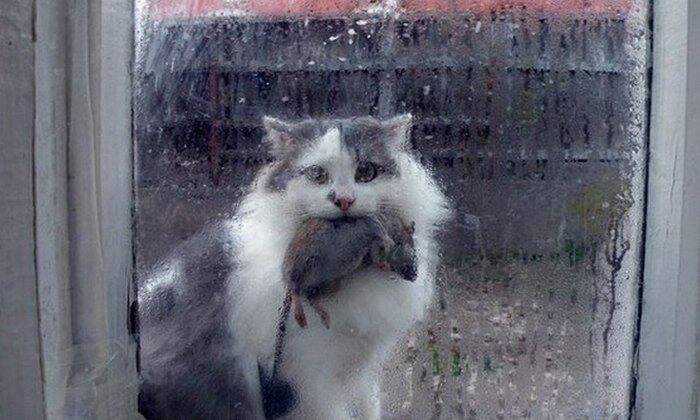 Демотиваторы дорогой ты кота впустил ходе проверки