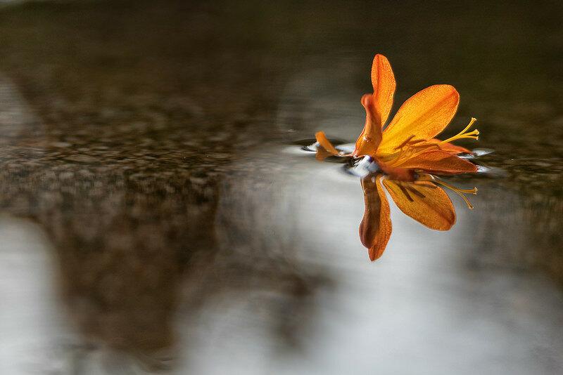 Новые прекрасные фотографии природы и городских сюжетов (Unsplash и Flickr) 0 14523c f1c05c1a XL