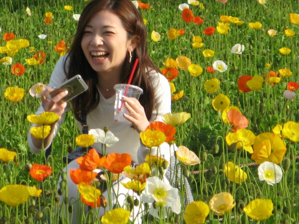 Японские маки парка «Showa Memorial Park». Город Тасикава