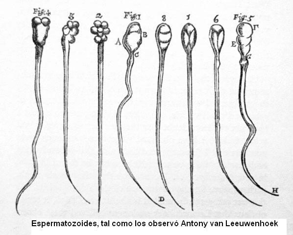 espermatozoides.jpg