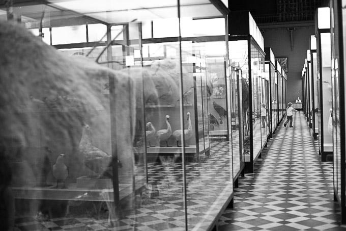 Зоологический музей МГУ. фотографии
