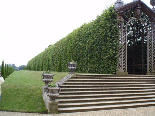 Зеленые террасы