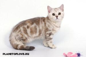http://img-fotki.yandex.ru/get/3810/murrrr-murrrr.6/0_3b153_71ba0a87_M.jpg
