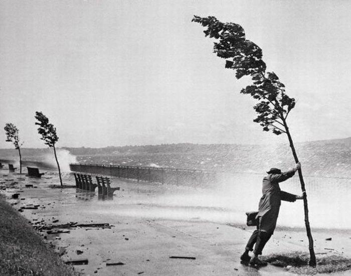 Man Holding Onto Tree During Hurricane Carol 1954