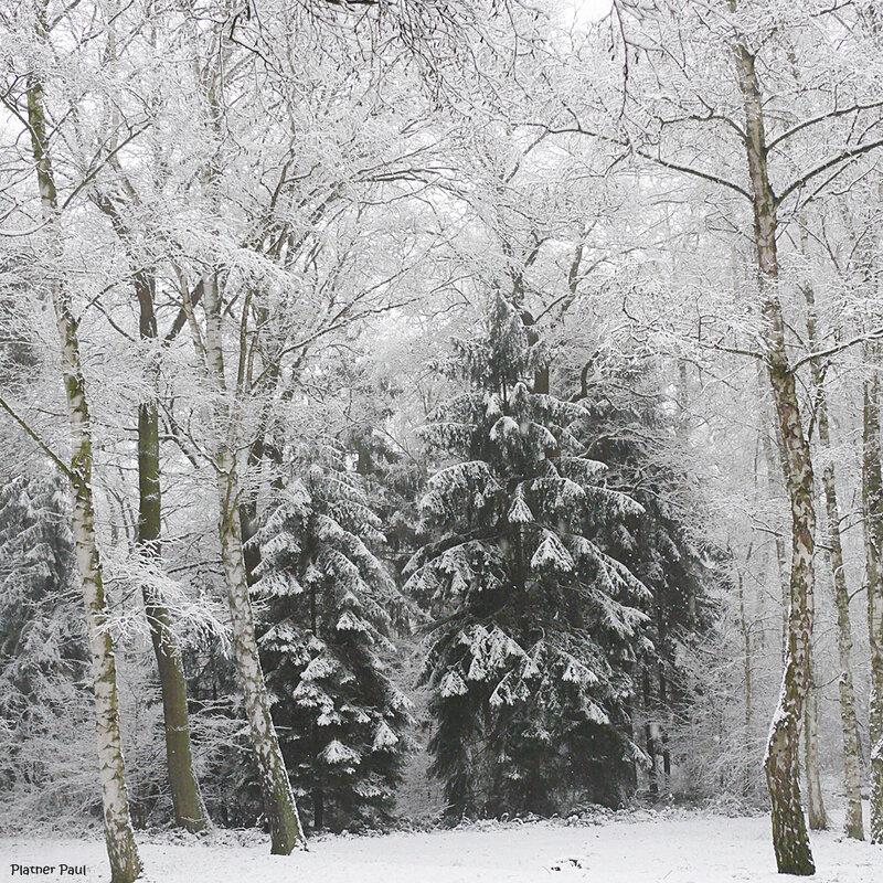Зима, Зима...