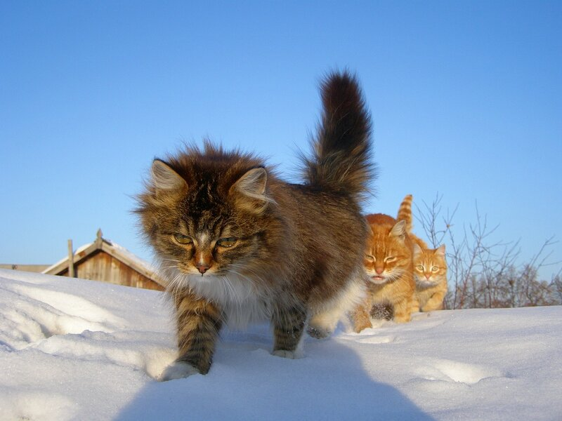 http://img-fotki.yandex.ru/get/3811/alllebedev.bf/0_27a12_d1ced8a3_XL
