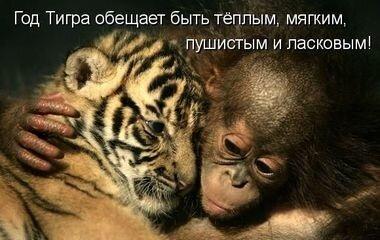 Любовь, семья и обезьянки