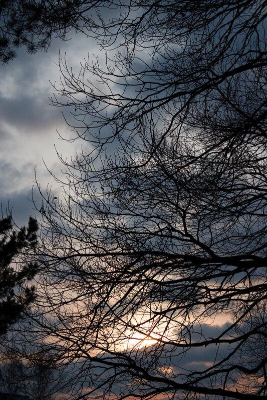 Закат и ветви
