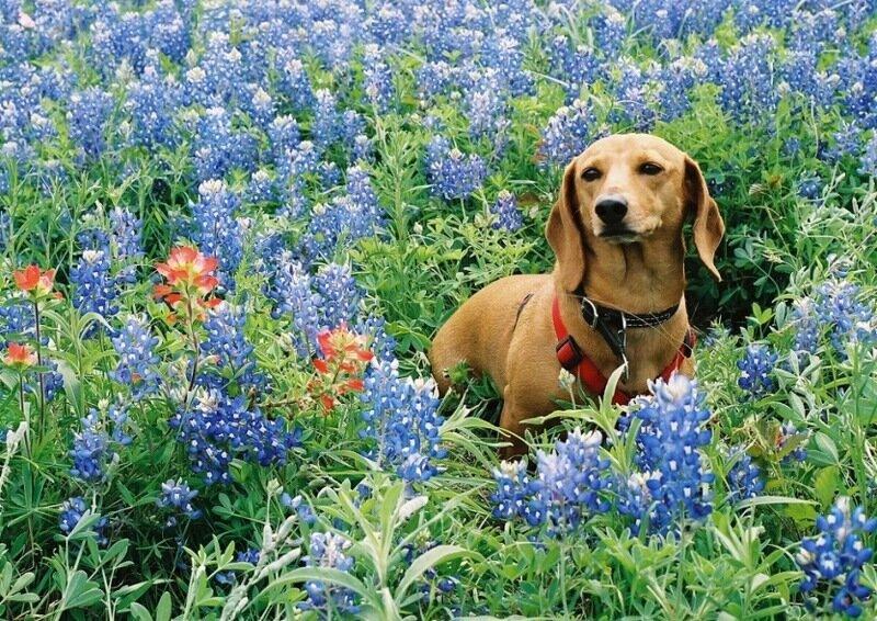 Картинки клумбы и цветников во дворе своими руками фото может быть