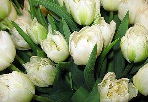 В Приморье предотвращена реализация заражённых цветов