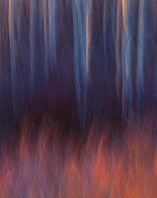 Лесной пожар. Автор фото: Марк Адамус