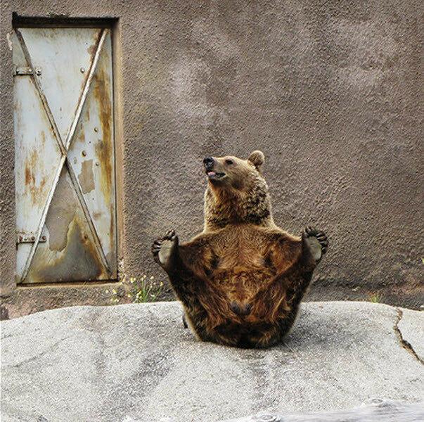 Медведь йог
