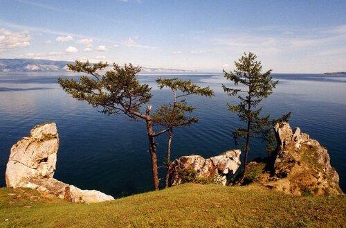 Байкальские сосны
