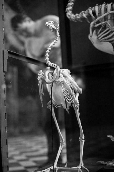А люди, как птицы, фсе любопытно