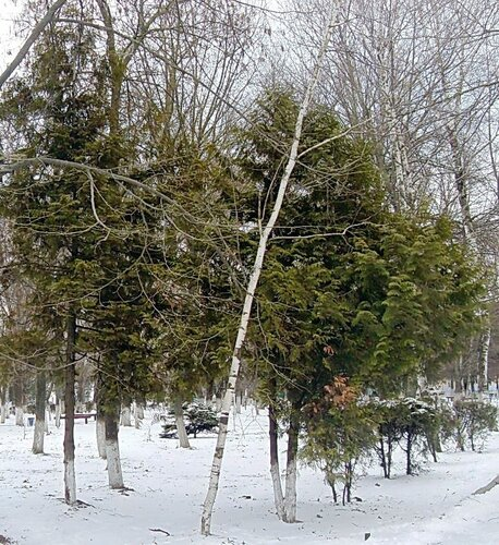 Мартовский снег (19)