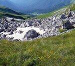 003. Цветы гор. Фотограф Алексей Значков (19)