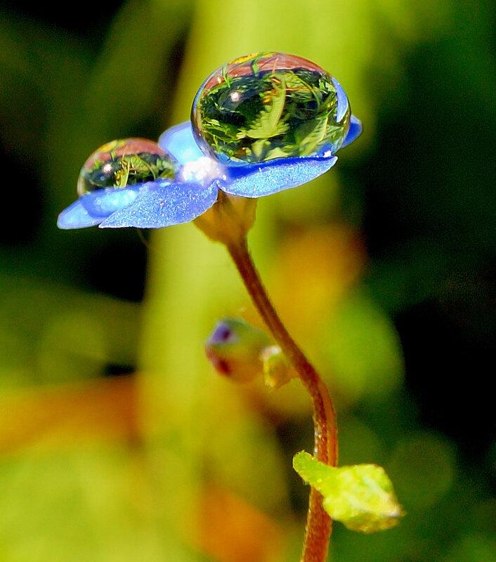 Капли на цветке