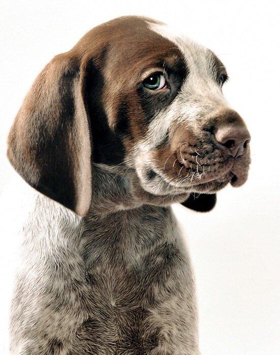 фото собак,Matt Laur