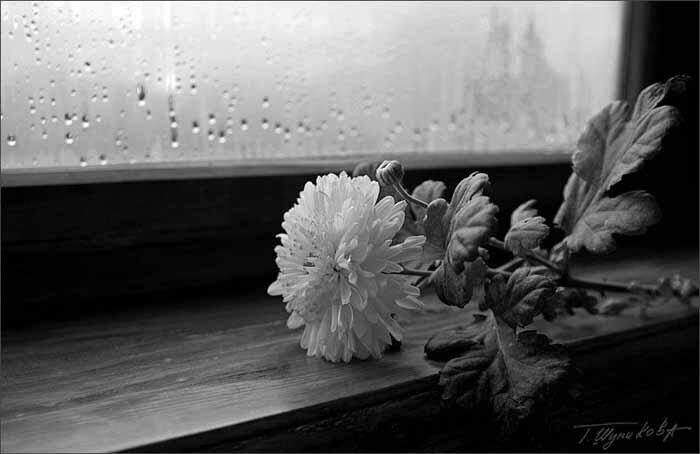 черно-белые фото,автор ShuTon
