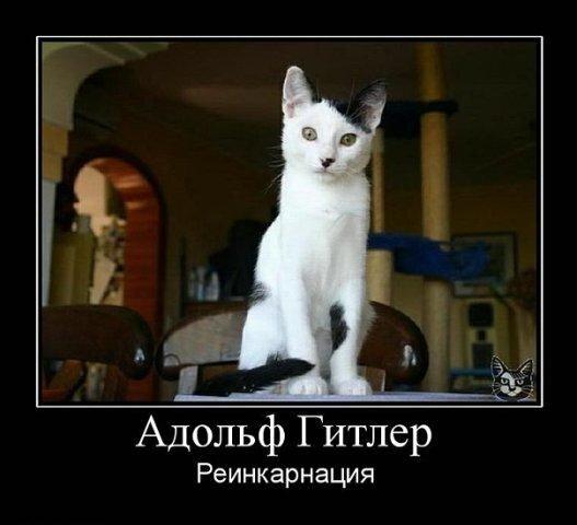 кот облезлый фото
