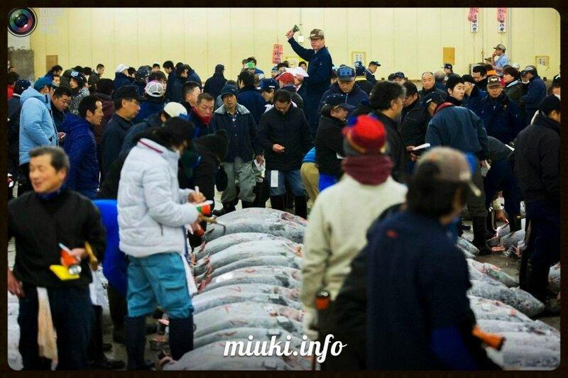 Японский тунцовый аукцион