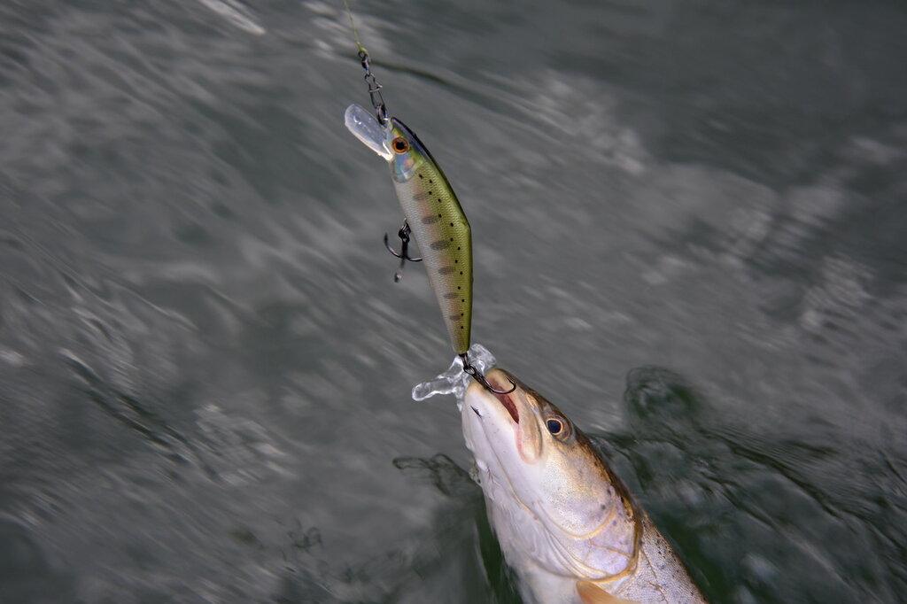 рыбалка на мане запреты на рыбалку