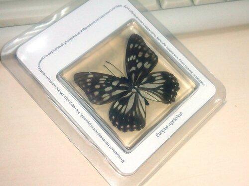 Бабочки №88 - Переливница никтелиус (Euripus nyctelius)