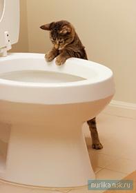 Как приучить кошку к унитазу фото схема