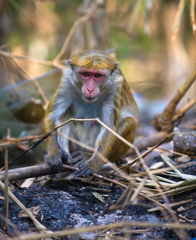 Огонь придумала не я - немного спичкой подожгла:лицо- мочалка ,джунглей нет, всем обезьянам, кто послание читает- пламенный привет!