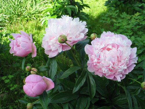 каталог срезанных цветов с фото скачать