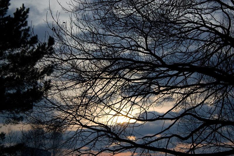 Ветви и закат