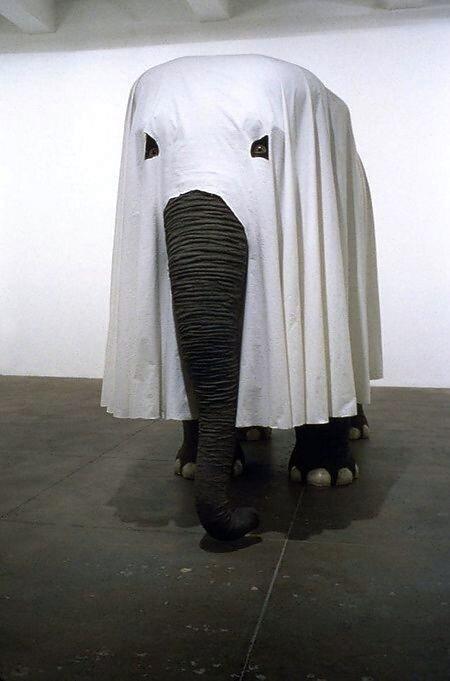 слон приведение