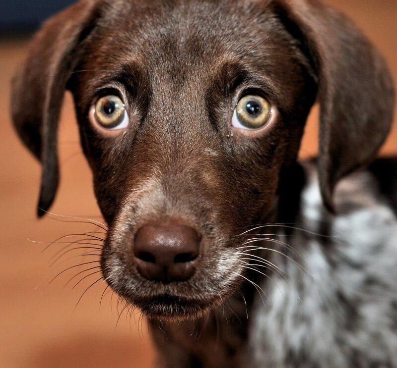 фото собак by kankai