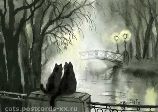 Картинки по запросу коты в тумане  фото