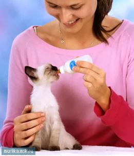 Уход за котятами как ухаживать за