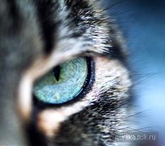 Физиология кошки