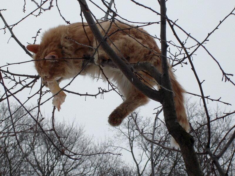 Зима,с.Остров, подворье,котик Персик-Рыжик