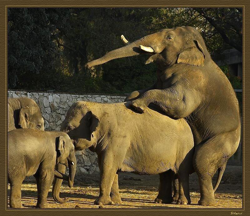 Смешные стоп-кадры с животными (186 фото) .