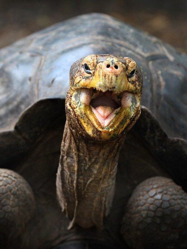 животный мир,фотограф Rob Kroenert
