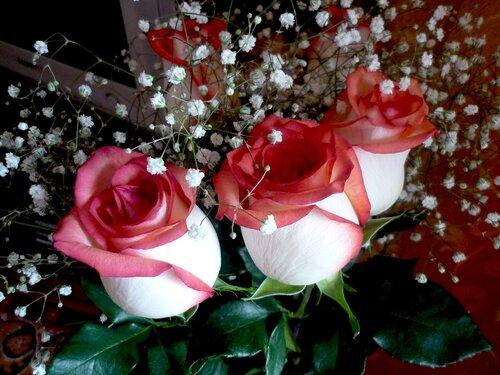 цветы с днем рождения иришка картинки