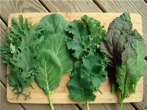 Ученые уверены - шпинат и листья салата ключ к здоровью